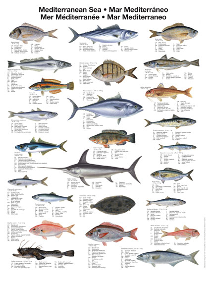 Image gallery names of ocean fish for List of fish to eat