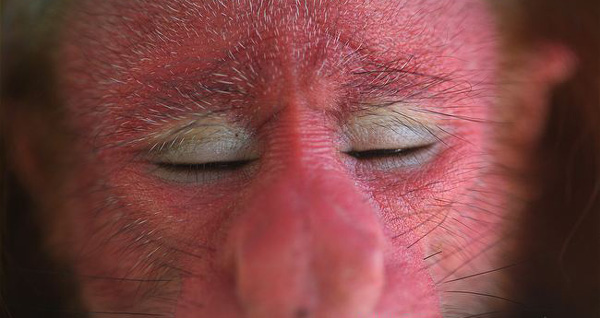 albstroka-blog-majmuni-i-turpshem-lorena-stroka-gazetare
