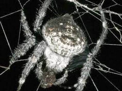 merimangat-bejne-seks-oral-albstroka-blog-lorena-stroka-biografia-foto-shkrime-wikipedia