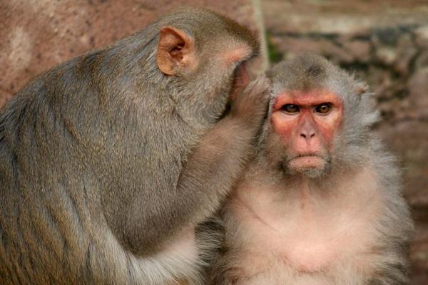 lorena_stroka_biografia_gazetare_pse_nuk_flasin_majmunet