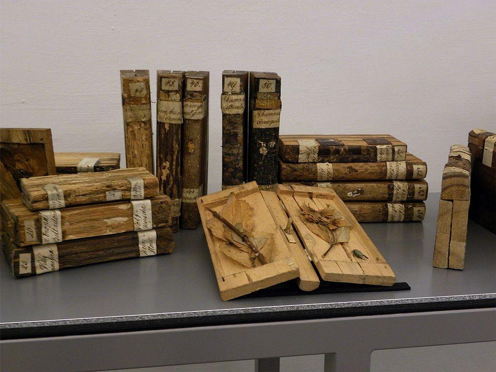druteka-biblioteke-prej-druri-lorena-stroka-artikuj
