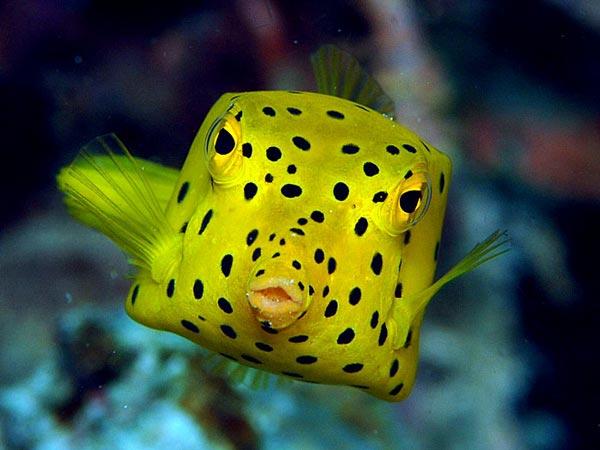 peshku-katerkendesh-shkrime-nga-lorena-stroka-kuriozitete-per-gjallesat-ujore