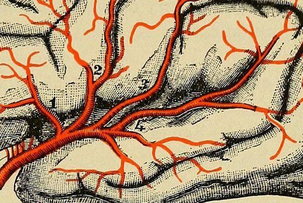 te-dhena-interesante-mbi-trurin-shkrime-nga-lorena-stroka-biografia-wikipedia=facebook-gazeta-albstroka